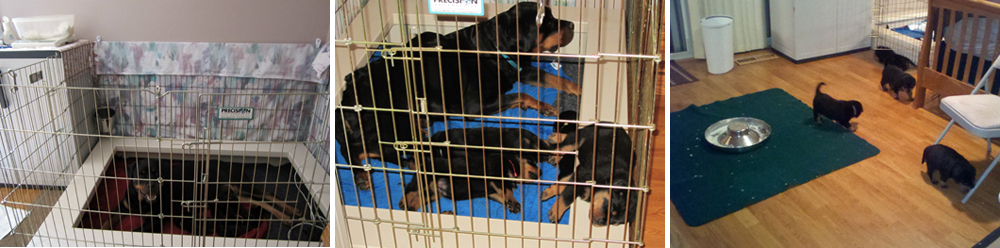 Dreibergen Rottweilers Home And Kennels